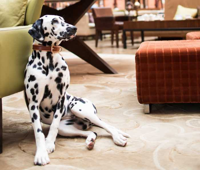 hansom lounge st pancras renaissance hotel london dog friendly