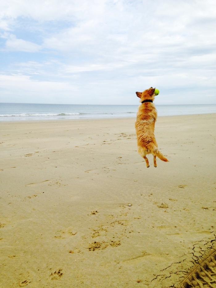 Camber Sands Dog Friendly Beach