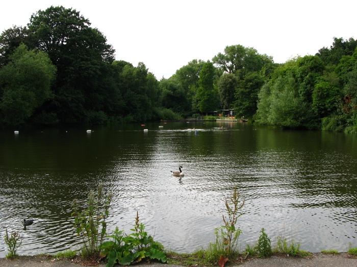 Hampstead Heath Dog Friendly