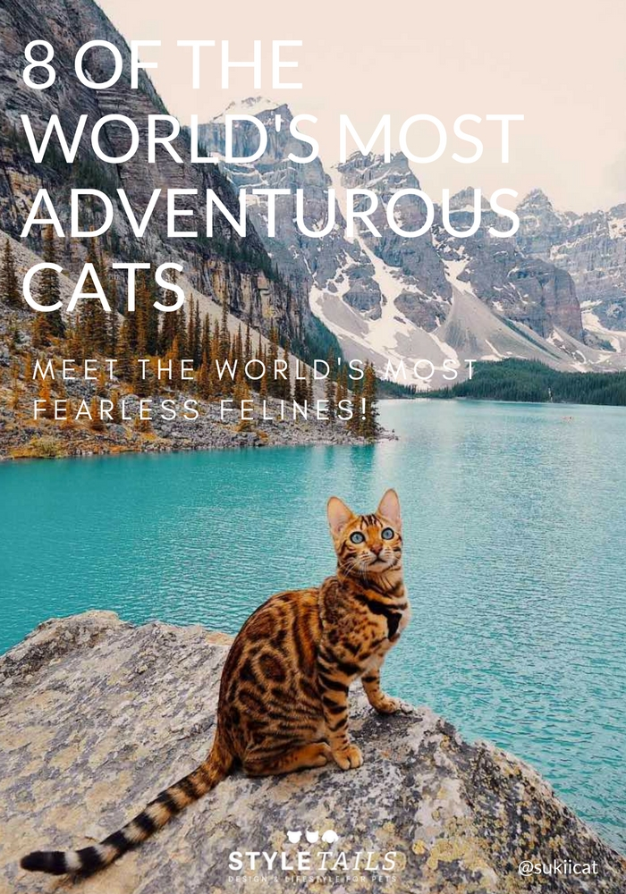 8 of the world's most adventurous cats sukiicat