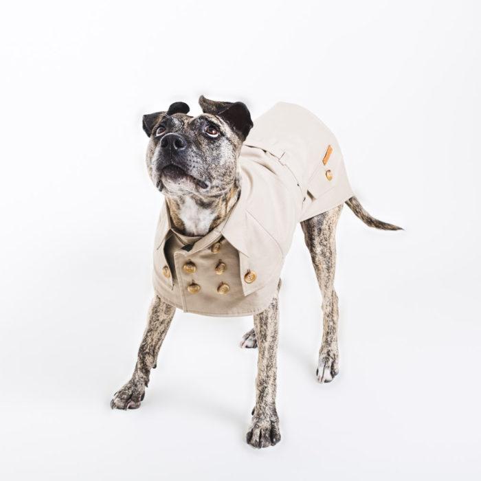 designer dog trench coat happy staffy