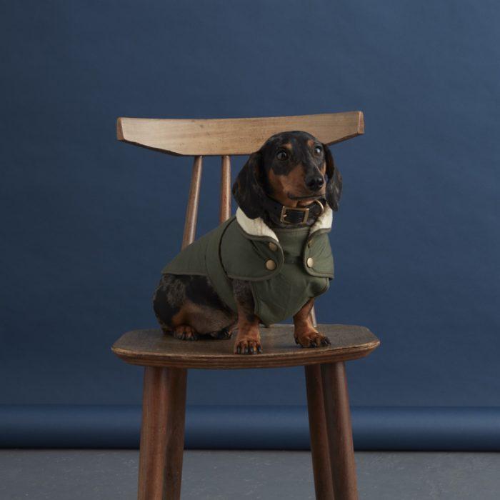 waterproof dog coat
