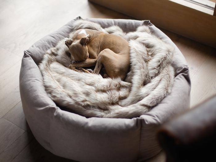 charley chau ducky donut dog bed