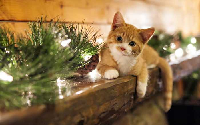 Cat Christmas.Christmas Dinner Ideas For Dogs And Cats Styletails
