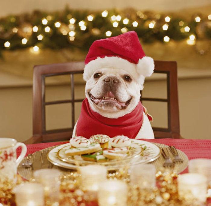 christmas dinner menu for dogs