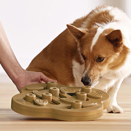 Dog Hide N Slide dog indoor games