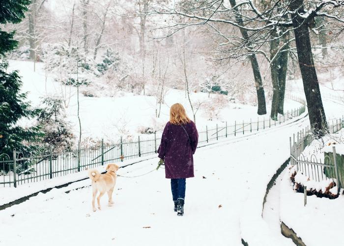 best winter dog walks in the UK
