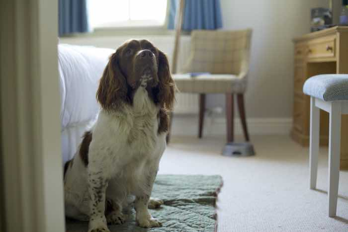 The Bell Inn - dog friendly hotel in the New Forest