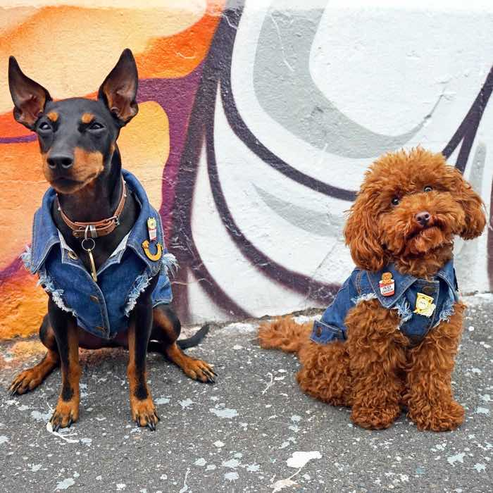 pethaus denim battle jackets for dogs