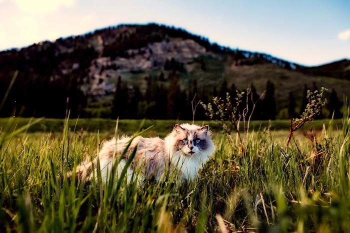 prepare cat for spring