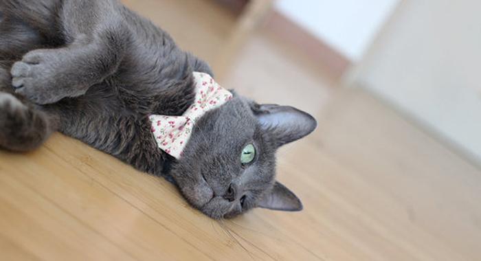Jasmine Bow Tie by Lovely Nao