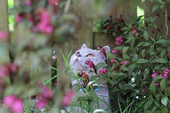 best plants for cats and plant toxic to cats