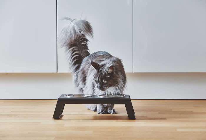 miacara desco double cat feeder