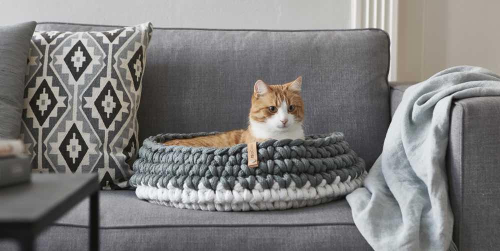 STYLETAILS | Design & Lifestyle for Modern Pet rs on e-mail cat, marketing cat, oracle cat, sharepoint cat, dom cat, linux cat, spastic cat, curl cat, photoshop cat, twitter cat, cgi cat, web cat, python cat, iphone cat, fireworks cat,