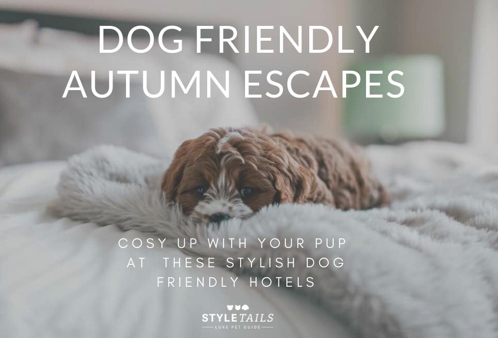 luxury dog friendly hotels styletails