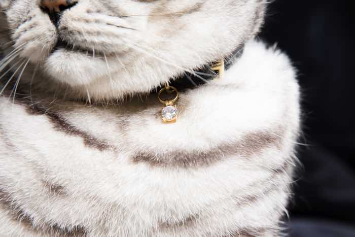 crystal cat collar charm cheshire and wain