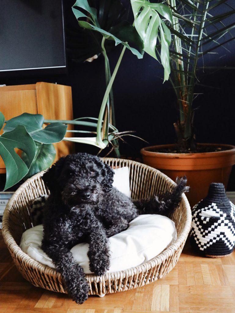 laboni calypso dog bed styletails