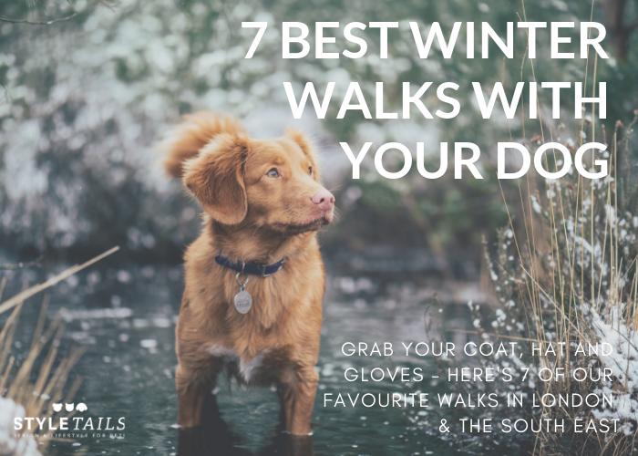 best winter dog walks london