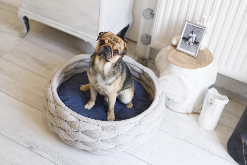 Laboni Riva dog bed styletails