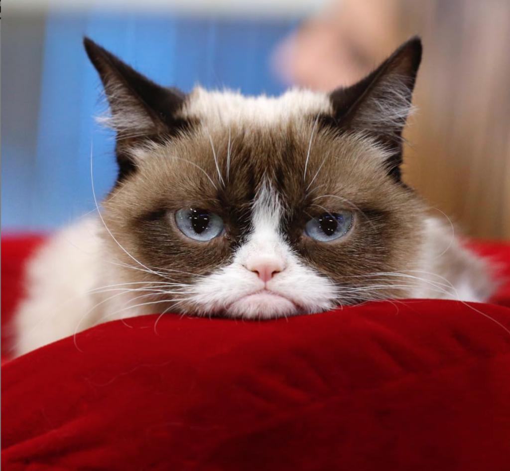 Grumpy Cat Instagram