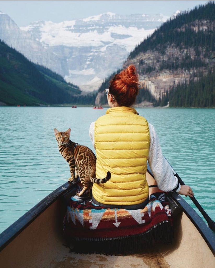 sukii cat instagram