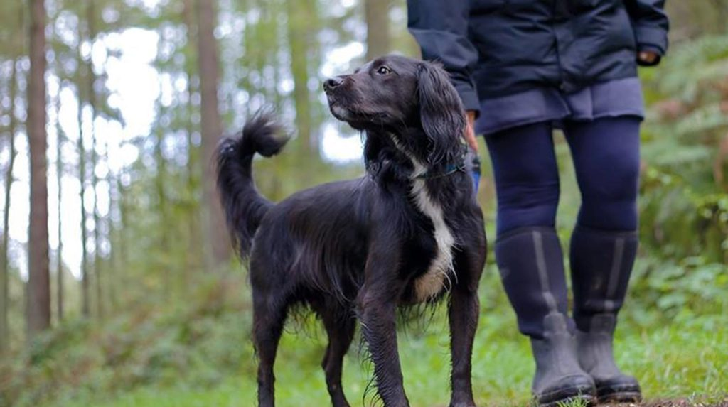 alice holt forest dogs