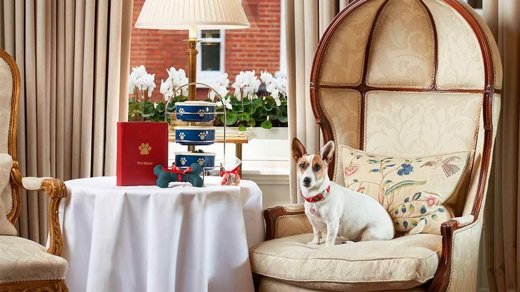 Egerton House Hotel dog friendly london