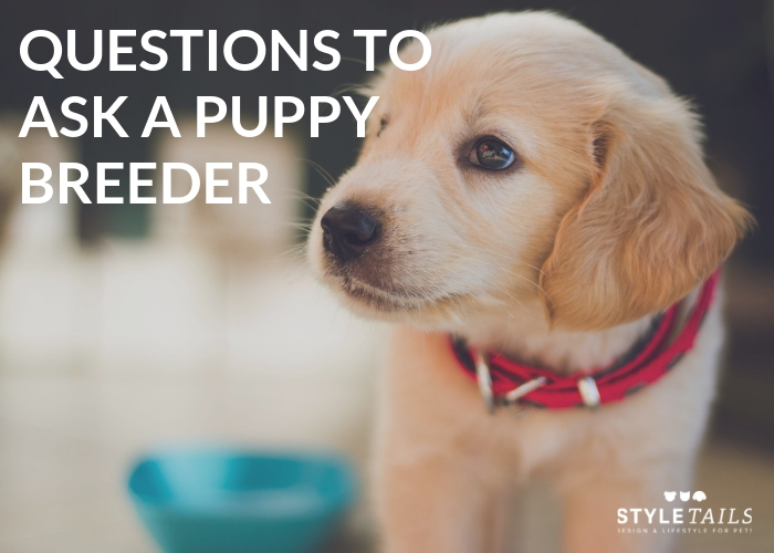6 Questions You Need to Ask a Puppy Breeder | STYLETAILS