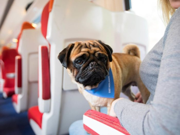 how to travel on train with dogs