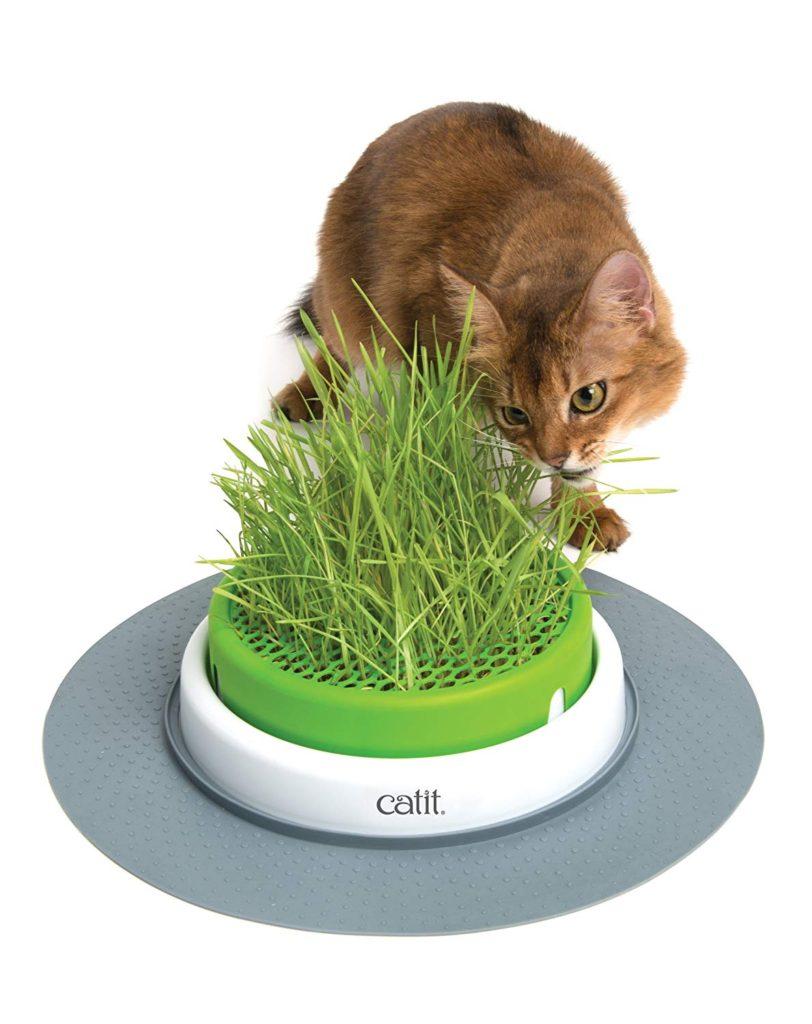 catit cat grass planter