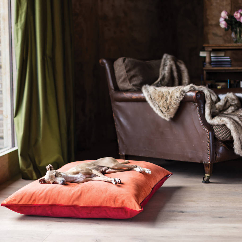 charley chau velour contrast dog bed mattress