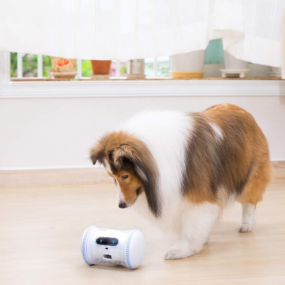 varram pet fitness robot toy